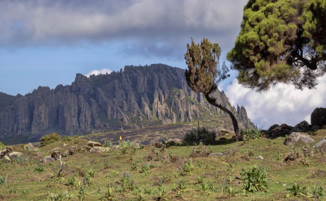Sanetti Plateau, Bale National Park